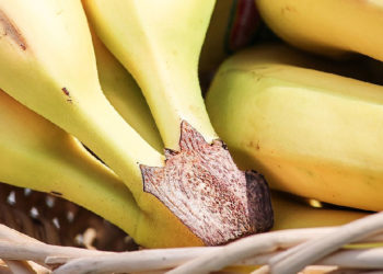 Warum ist die Banane krumm? Das ist die Wahrheit samt Erklärung!