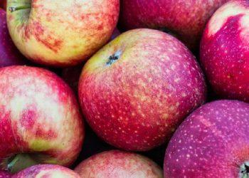 Äpfel richtig lagern und verwerten | Tipps & Rezepte zum verarbeiten
