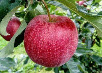 Die Ballaststoffe im Apfel | Alle Werte pro Apfel & 100g | Machen Äpfel dick?
